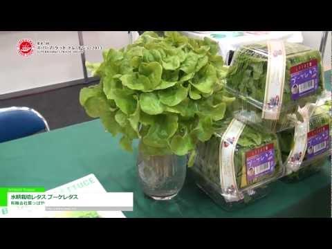 [第47回 スーパーマーケット・トレードショー 2013]水耕栽培レタス ブーケレタス - 有限会社葉っぱや